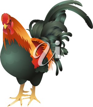 Royalty Free Clipart Image of a Rooster