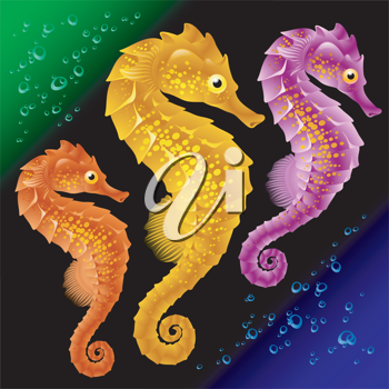 Royalty Free Clipart Image of Seahorses