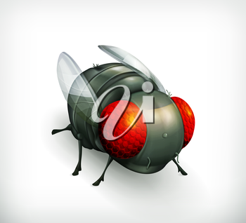Fly, vector icon