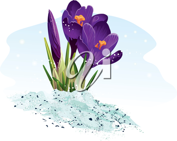 Royalty Free Clipart Image of a Crocus