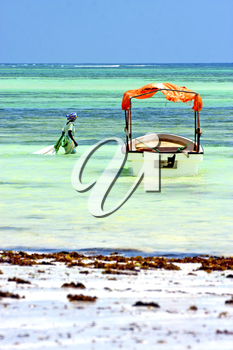 zanzibar beach  seaweed in indian ocean tanzania       sand isle   sky and boat