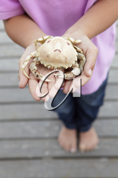 Detail young boy holding crab