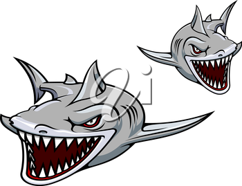 Danger gray shark with sharp teeth. Vector illustration for sport team mascot