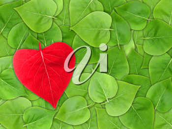 Abstract Valentine background with green leaf of lilac and red heart of leaf-form for your design. Close-up. Studio photography. Attention - it is not a seamless pattern.