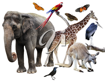 Royalty Free Photo of a Collage of Animals
