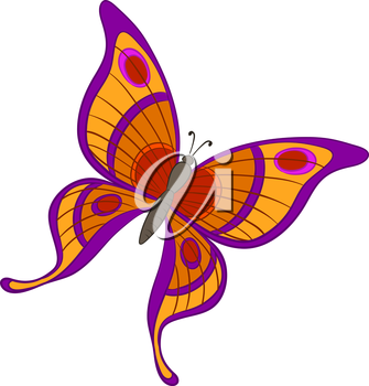 Vector, butterfly with various colorful wings on a white background
